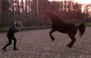 Lichaamstaal paard