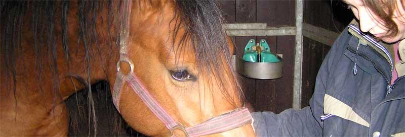 Paard begrijpen