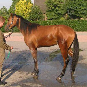 Spanning paard bij afspuiten