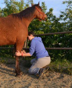 Benenwerk paard ontspanning