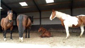 Rust bij paarden