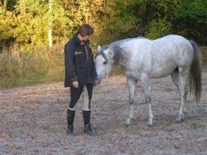 Paard beleefd
