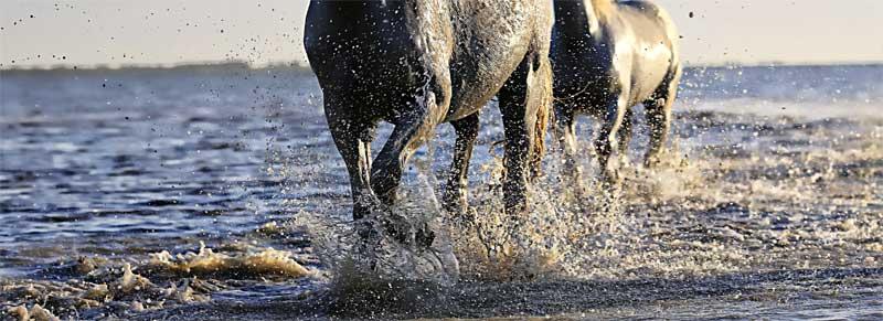 Paard water