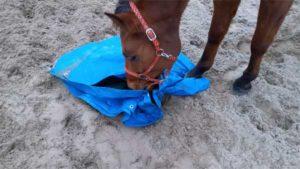 Zeiltje paard