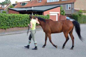 grenzen bij je paard