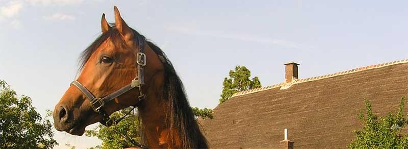 paard met stress