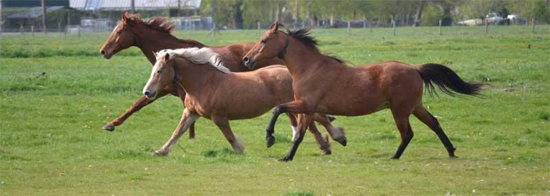 welzijn van jouw paard