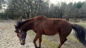 paard schrikt