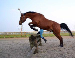 Paard vrijspringen