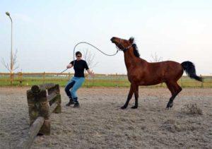 paard weigert hindernis