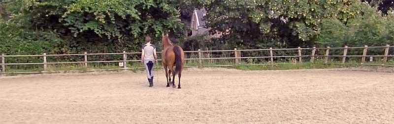 partner voor je paard