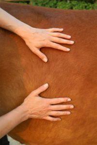Adem paard oefening