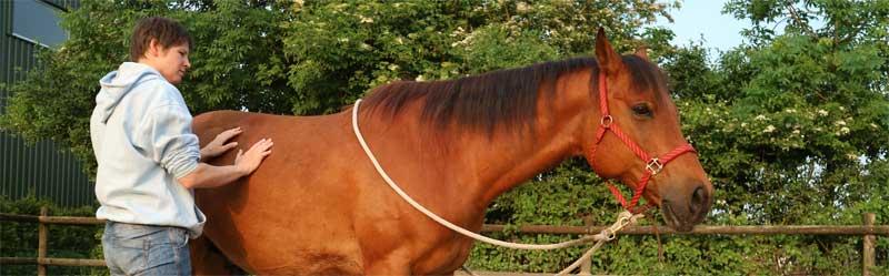 Gespannen paard oefening