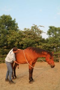 Tip paard leren ontspannen