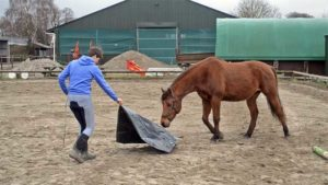 Zeil paard