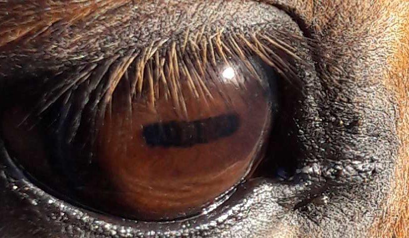 focus op je paard