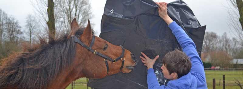 trainen van je paard