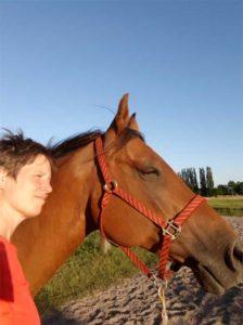 paard als partner