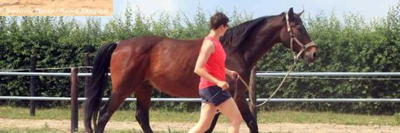 Paard horizontaal in balans