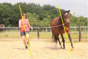 Paard verticaal uit balans