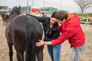 massage workshop paardenfeest