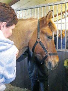 massage ontspant paard