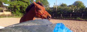 desensibiliseren van paarden