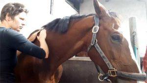 Bodywork paard