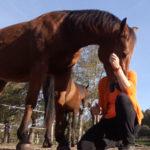 Ontspannen met je paard - onrust bij paard