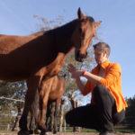 Ontspannen met je paard - ruimte vragen
