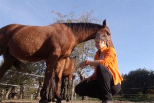 Ontspannen met je paard - rust
