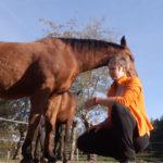 Ontspannen met je paard - rusten