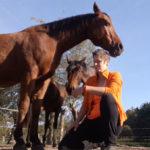 Ontspannen met je paard - effect op andere paarden