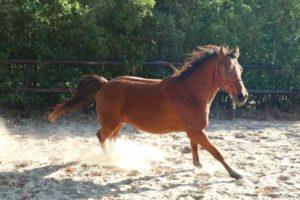 paard uit balans