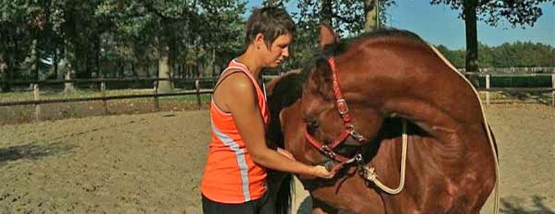 paard stretchen