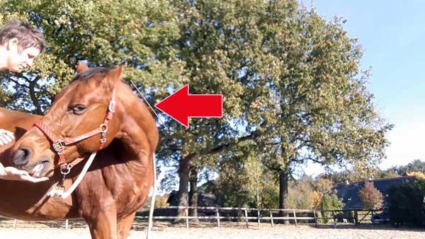 Stretch paard