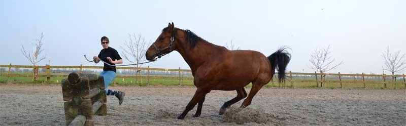 paard staakt