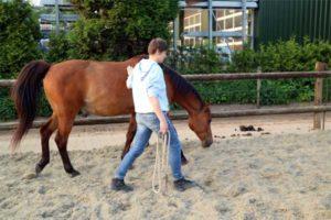 goede leider voor je paard