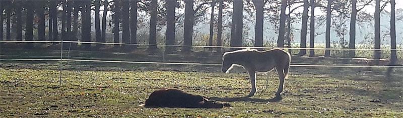overleden paard