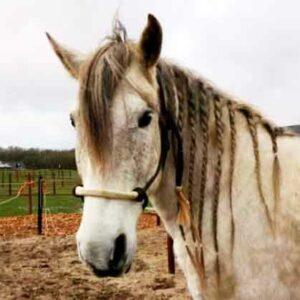 Mijn paard bijt Wat nu Advies en Tips bij een Bijtend Paard