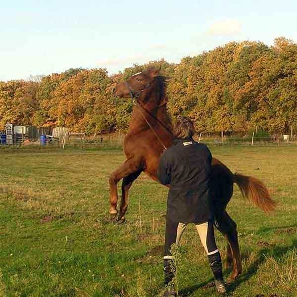 Mijn paard is te dominant Advies en tips dominant paard