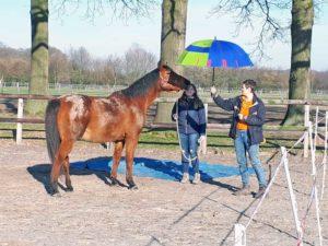 paard en paraplu