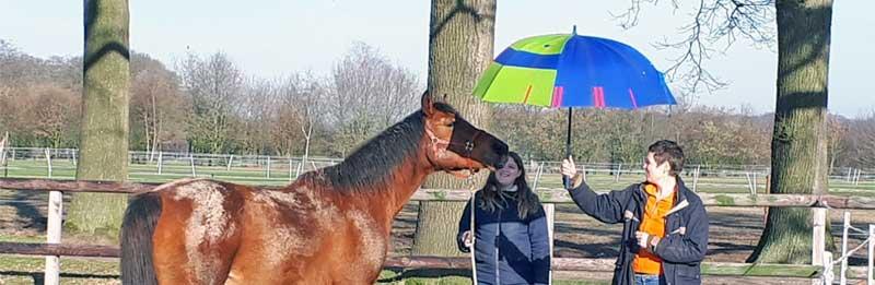 paardengedrag begrijpen