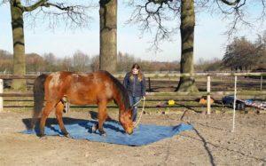 Zeiltje en paard