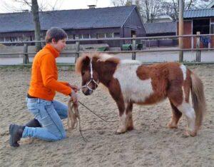 Oefening achterhand paard
