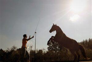 Steigeren paard oefening