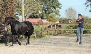 spelen met paard
