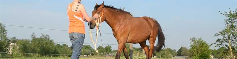 Grenzen stellen naar je paard