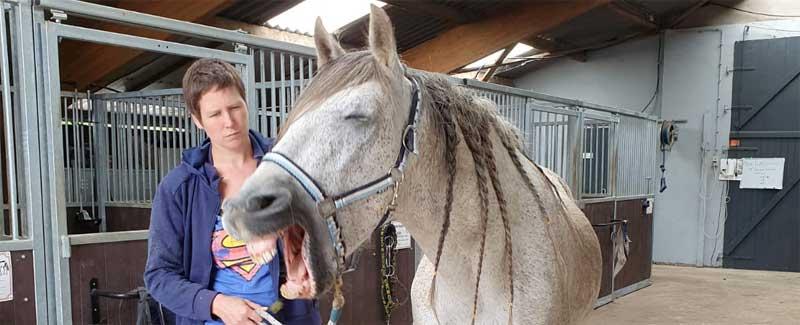 Halster probleem paard