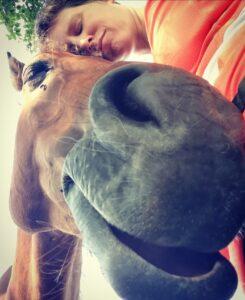 Ontspanning paard teken